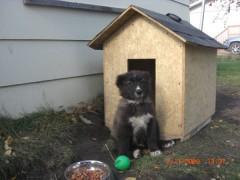 Kodiak's baby picture