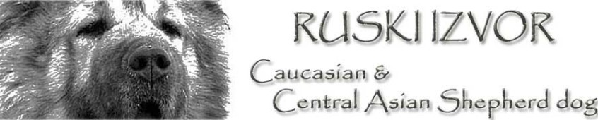 Ruski Izvor kennel - caucasian shepherd dogs, central asian shepherd dogs, Serbia