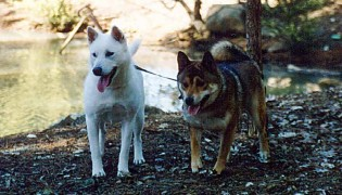 Tassha female Kishu and Akinno