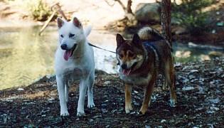 Tassha female Kishu and Akinno