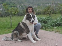 Nicol and Caesar in Italy