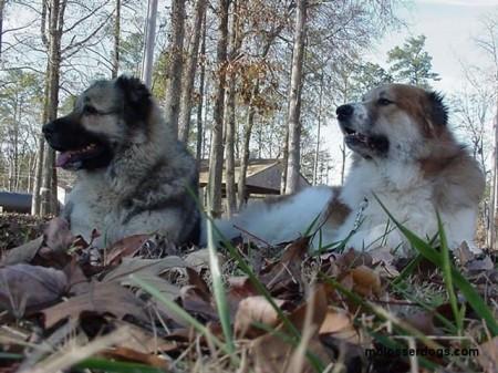 Shagi and Julius