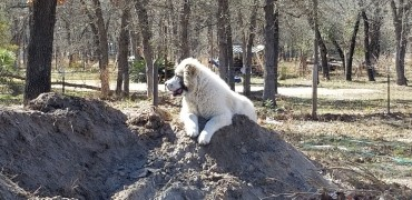 she loves being oh higher ground