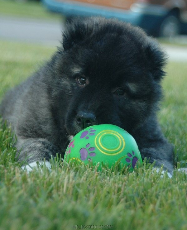 Pup and ball