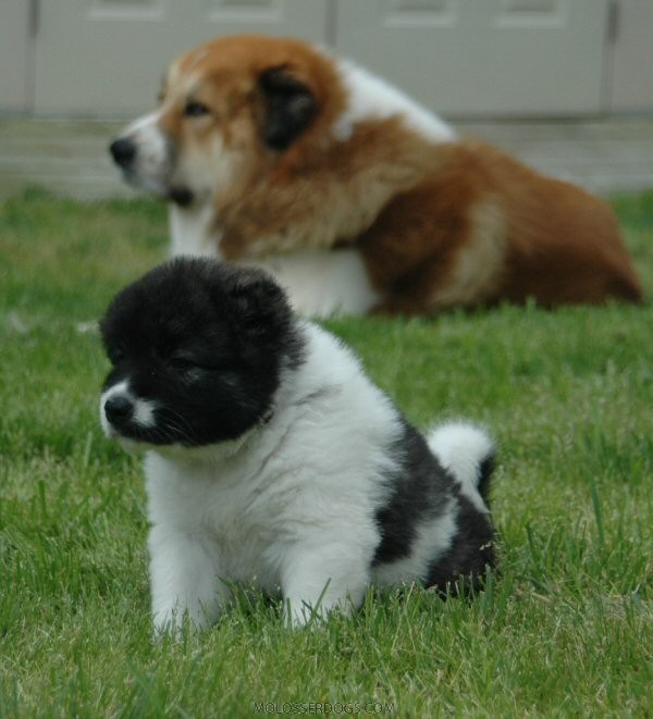 Pup and Julius
