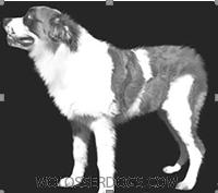 Abraxas Bulldogge