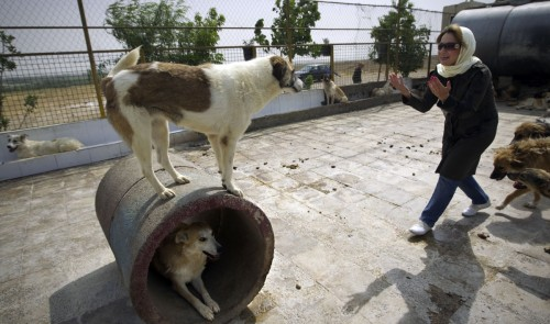 Iranian dog lovers dodge cleric's fatwa on dog ownership